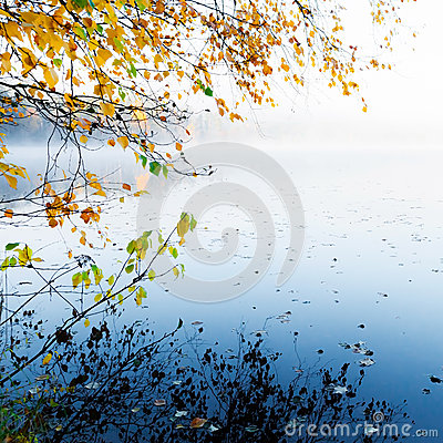 Autumn yellow leaves with reflection on still lake