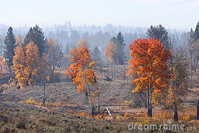 Autumn in Yellowstone