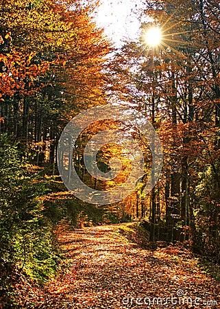 Free Autumn_07 Stock Images - 223324