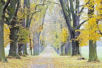 Autumnal alley
