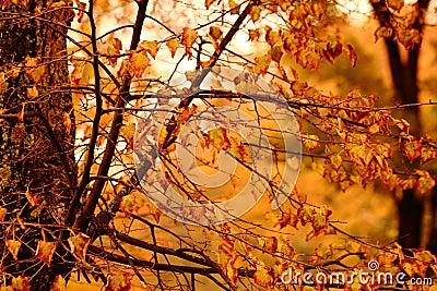 Autumnal Autumn forest