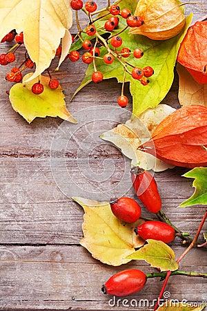 Autumnal border.