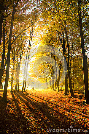 Autumnal Dreams