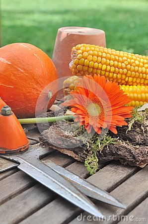 Autumnal flower and vegetable