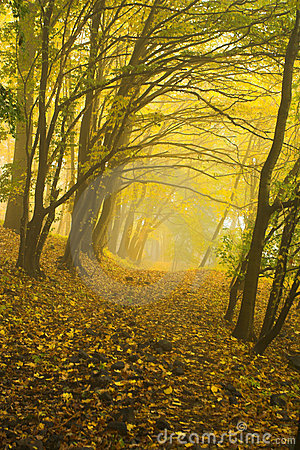 The Autumnal Forest