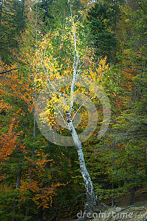 Autumnal forest environment