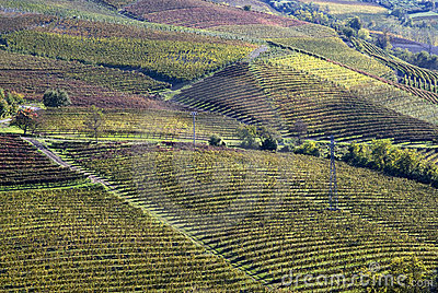 Autumnal landscape of vines and hills in Langhe