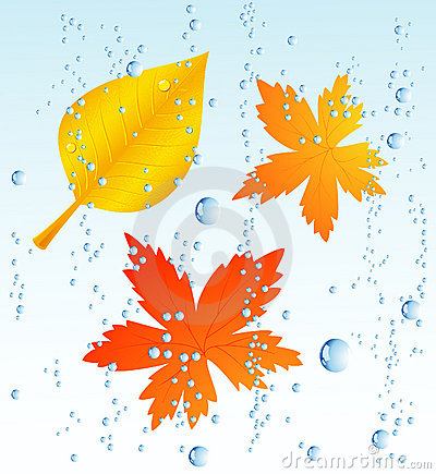 Free Autumnal Leaf In The Rain Royalty Free Stock Photo - 10693135