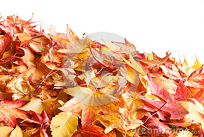 Autumnal leafs