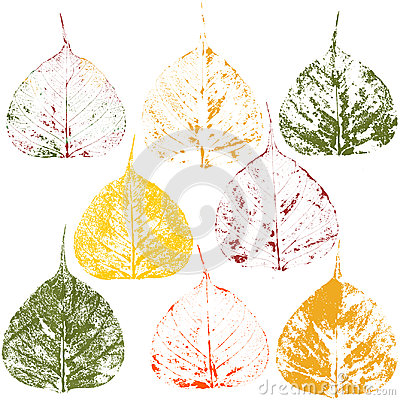 Autumnal leaves, print on white background Stock Photo