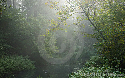 Autumnal misty erly morning by forest river