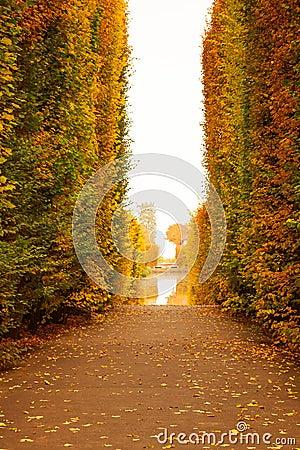 Autumnal park alley