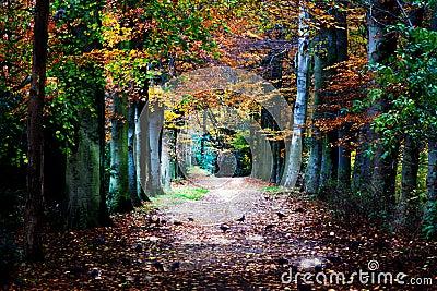 Autumnal pathway
