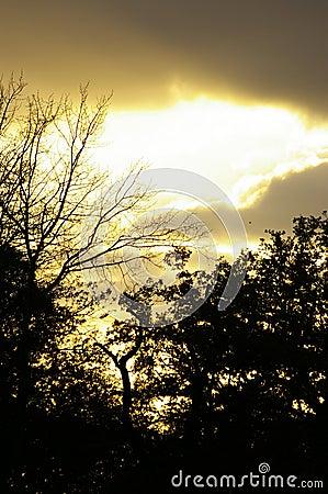 Autumnal sunset on forest