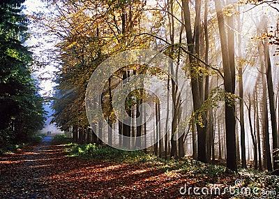 Autumnal trip