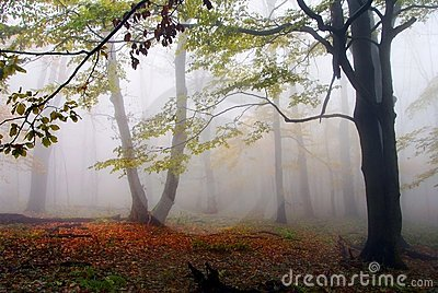 Autumnal view of deciduous wood