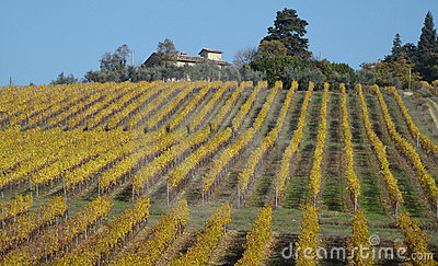 Autumnal vineyards
