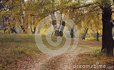 Autumnal wood