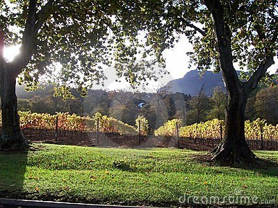 Autumncape Vineyard Constantia