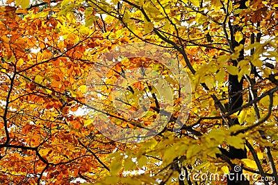 Autumns leaves no.9