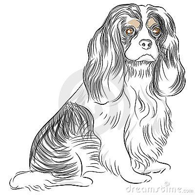 Avalier King Charles Spaniel Dog