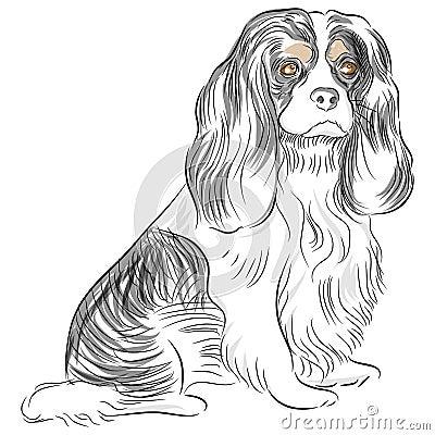 Avalier King Charles Spaniel Dog