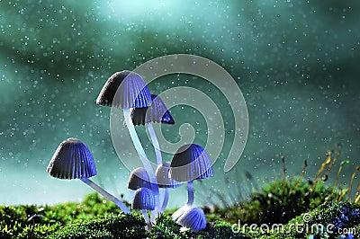 Avatar mushroom lamp