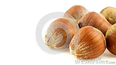 Avelã nos shell que deslizam da direita para a esquerda dentro e fora da vista no branco filme
