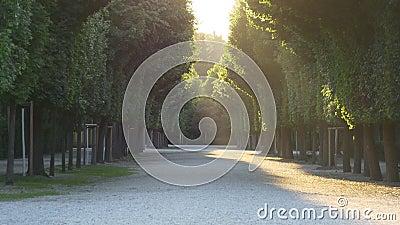 Avenue de parc dans les rayons du coucher de soleil banque de vidéos