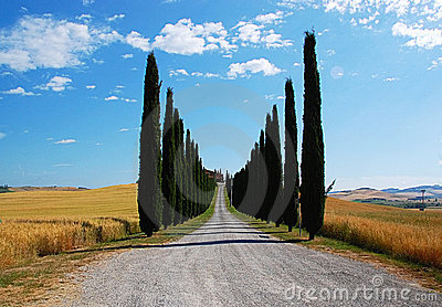 Avenue lined with cypress