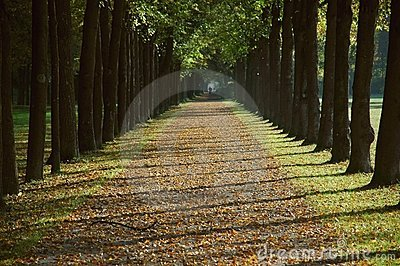 Avenue in a park in autumn