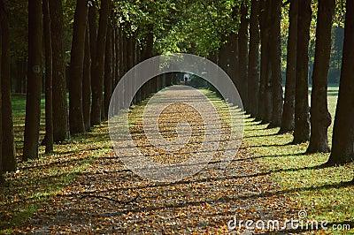 Avenue in a park in autumn