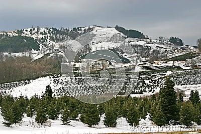 Avery County Christmas Tree Farm