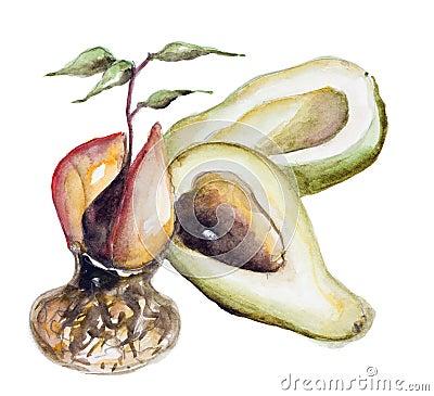 is avocado a fruit fruit wreath