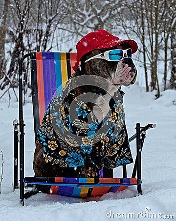 Free Awaiting A Hot Summer Stock Photos - 132906163