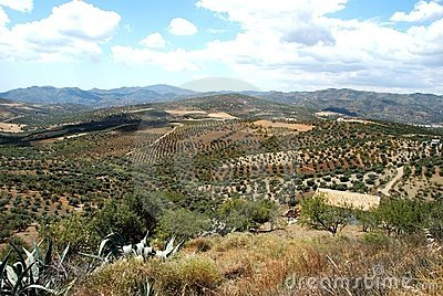 Axarquia countryside, Andalusia, Spain.