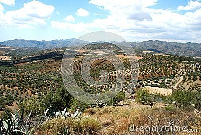 Axarquia countryside, Andalusia, Spain.