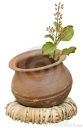Free Ayurveda Holy Basil/tulasi In A Clay Pot Royalty Free Stock Photo - 8979655