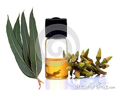Ayurvedic eucalyptus oil