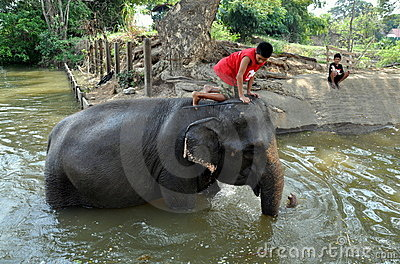 Ayutthaya, Thailand: Boy Riding Elephant Editorial Photo