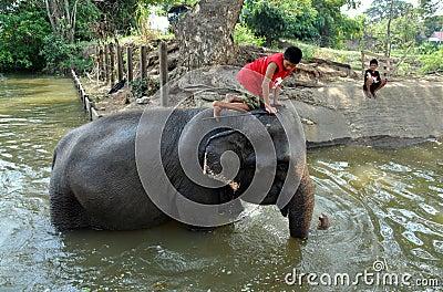 Ayutthaya, Thailand: Boy Riding Elephant Editorial Photo