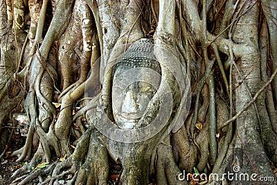 Ayutthaya, Thailand: Buddha in Tree Roots