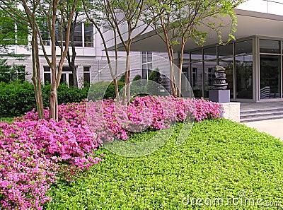 Azaleas at Office Building