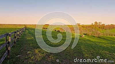 Azienda agricola del cavallo di fienarola video d archivio