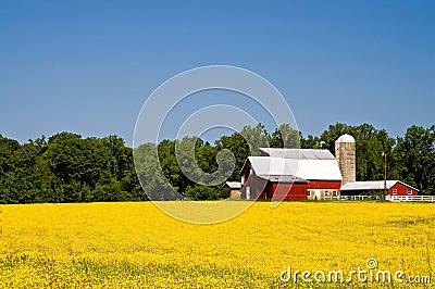 Azienda agricola del paese nella primavera
