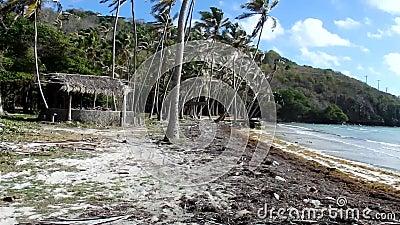 Azionamento fuori strada attraverso un boschetto della noce di cocco nei Caraibi stock footage