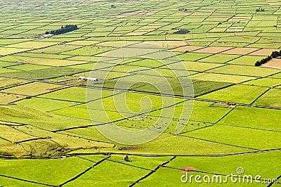 Azore Fields