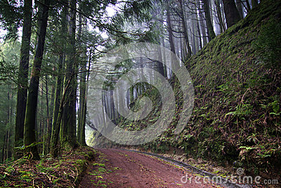 Azores: Green forest
