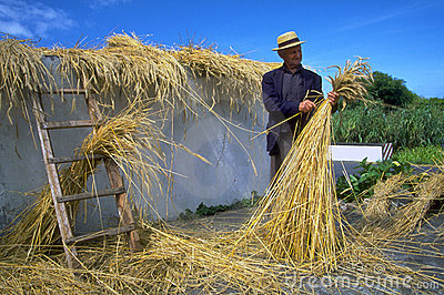 Azores - thatch weaving Editorial Image