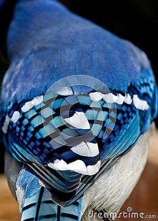 Azul de la naturaleza